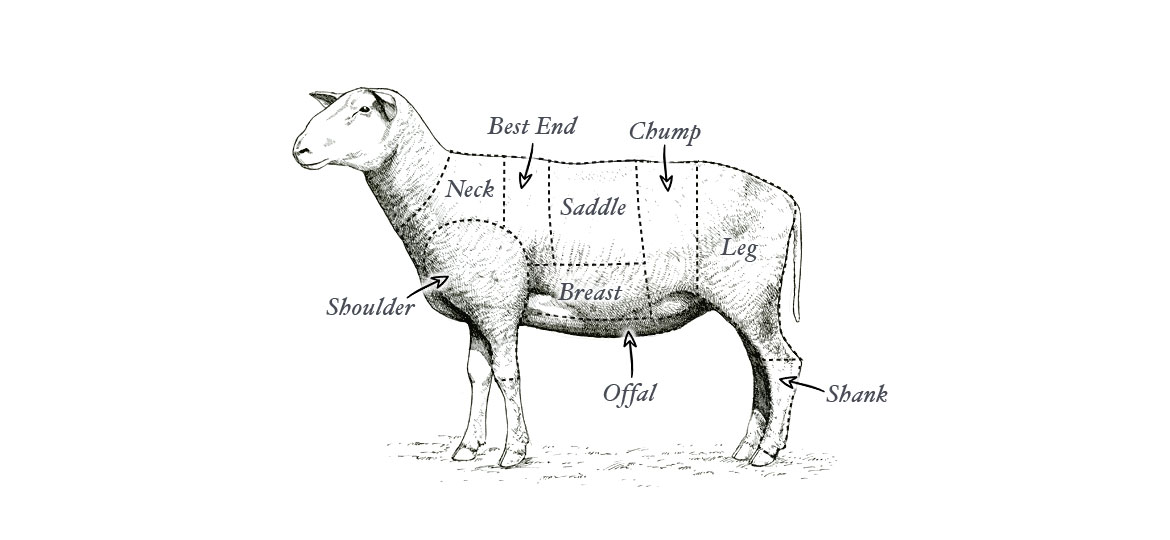 lamb diagram