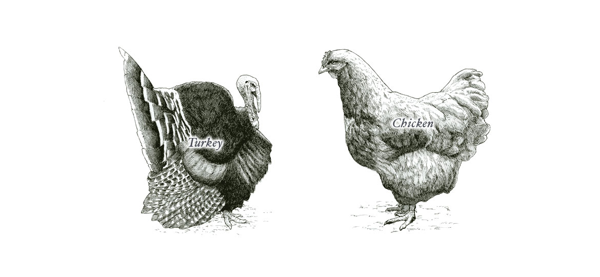 poultry-diagram